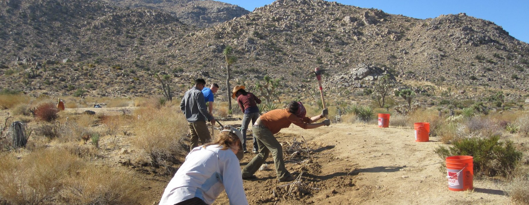 photo of stewardship volunteers working hard in the desert