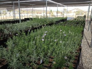 Native Plant Nursery & Seed Bank